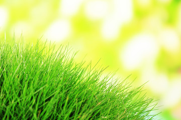 Beautiful green grass on nature background