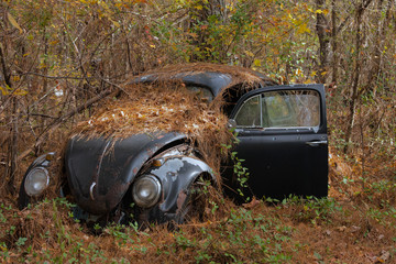 Volkswagen in the Woods