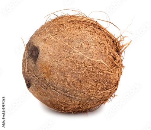 Волосатый кокос