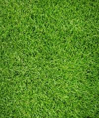 Sport grass field