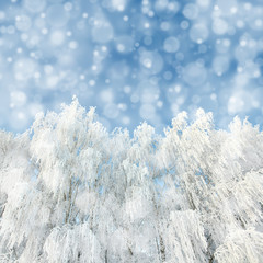 Fototapete - snowfall and winter woods background