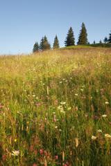 Summer sunny meadow