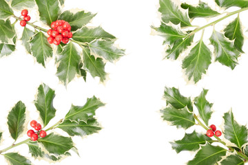 Holly twig border on white, clipping path