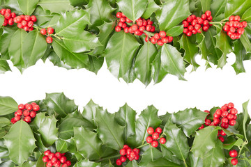 Holly border, Christmas decoration with clipping path