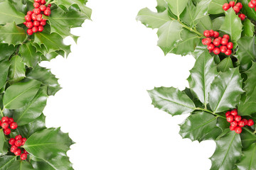 Holly border isolated on white, clipping path
