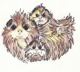 three guinea pigs. picture
