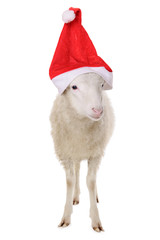 Sheep in hat