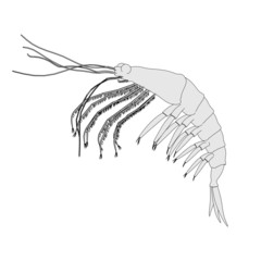 cartoon image of crustacean animal - krill