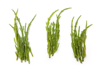 Samphire isolated on a white studio background.