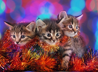 holiday group of small kittens