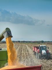 Wall Mural - corn harvest on farmland