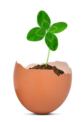 Clover growing out of the egg.New life concept.