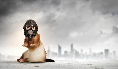 Ferret in gas mask
