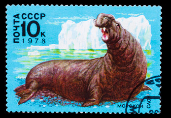 USSR - CIRCA 1978: A Stamp printed in USSR, shows image sea elep