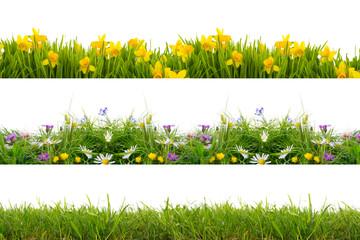 Papiers peints Narcisse freisteller wiese rasen blumen
