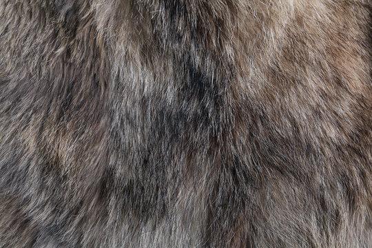 wolf fur texture