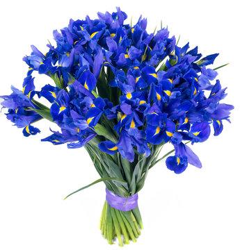 Bouquet of fresh blue irise flowers isolated on white background