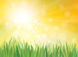 Vector sunshine background with grass.