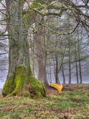 Canoe by tree