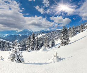 Wall Mural - Beautiful winter landscape in the Carpathian mountains