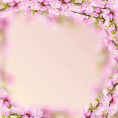 Fresh almond flowers on pink background.