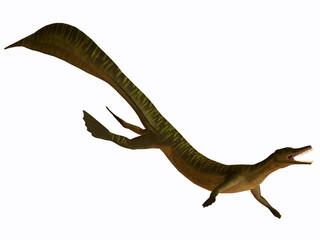 Mesosaurus on White