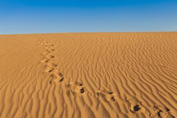 Fotoväggar - Death Valley Desert