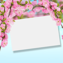 Postcard with fresh spring flowering tree and empty  place for y