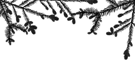 black fir branches stripe