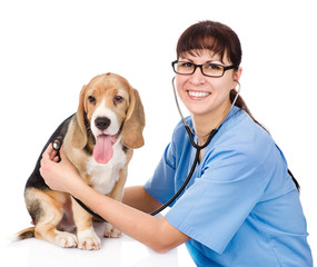 vet checking the heart rate of a puppy. isolated on white