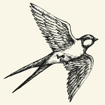 """Vector drawing of a series of sketches """"Birds"""". Swallow"""