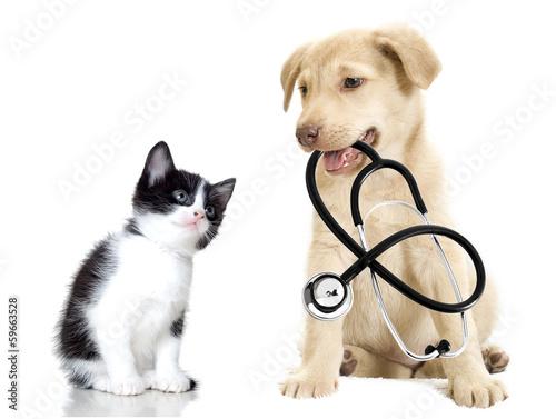 Fototapete puppy and kitten