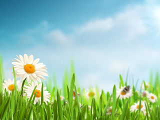 Bright summer afternoon. Natural backgrounds with beauty daisy f