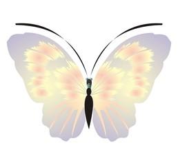 Farfalla 3 Giuseppe