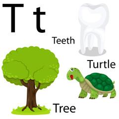 T alphabet