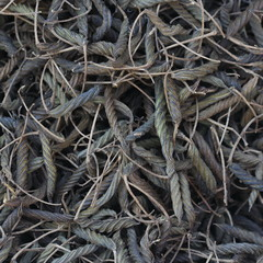 close up dry Chinese herb