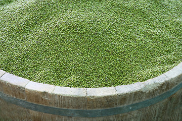 green beans in wood tank