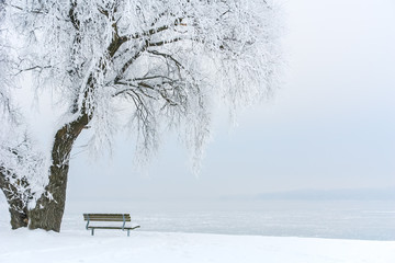 Icy Tree on an Icy Lake III