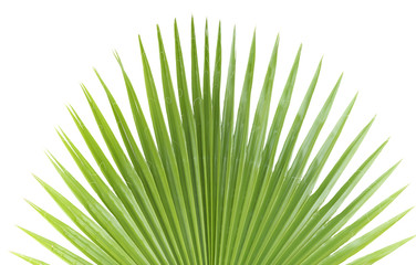 Palm leaf.