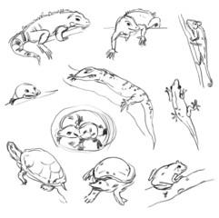 Reptiles. Set. Chameleon, tree-frog, iguana, python, boa, turtle