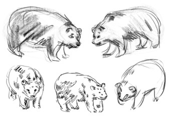 Brown bear. Set. Hand-drawn