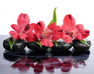 Beautiful red orchid and therapy stones reflection