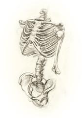 Learning drawing skeleton
