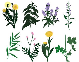 Vector illustration of different kind of plant