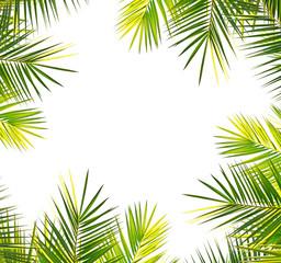 palm frame on white