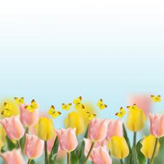 Fresh tulips on blue background.