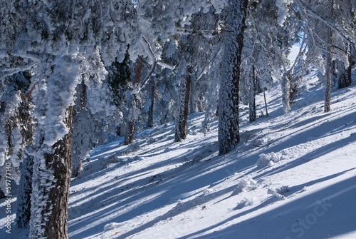Navacerrada Spain  city images : Snow in navacerrada madrid spain