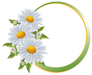 Flower borders. Bouquet camomile isolated.