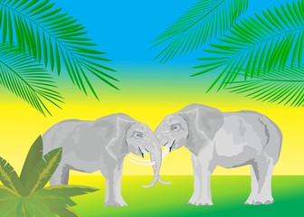 Elefants illustration