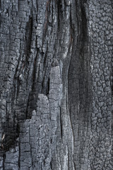 carbonized wood